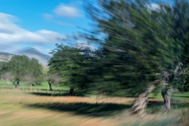 Olive trees pictured from train